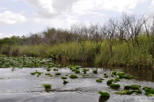 USA - NP - Everglades